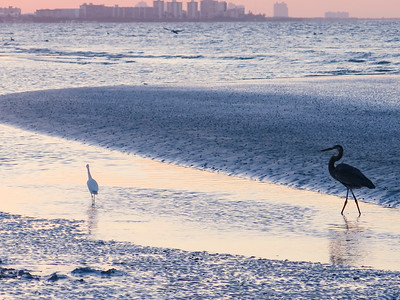 Heron and Egret, Ft Myers Beach, Florida