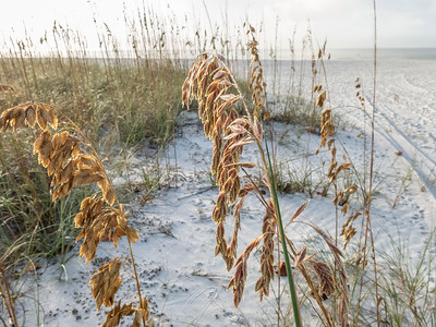 Sea Oats, Ft Myers Beach, Florida