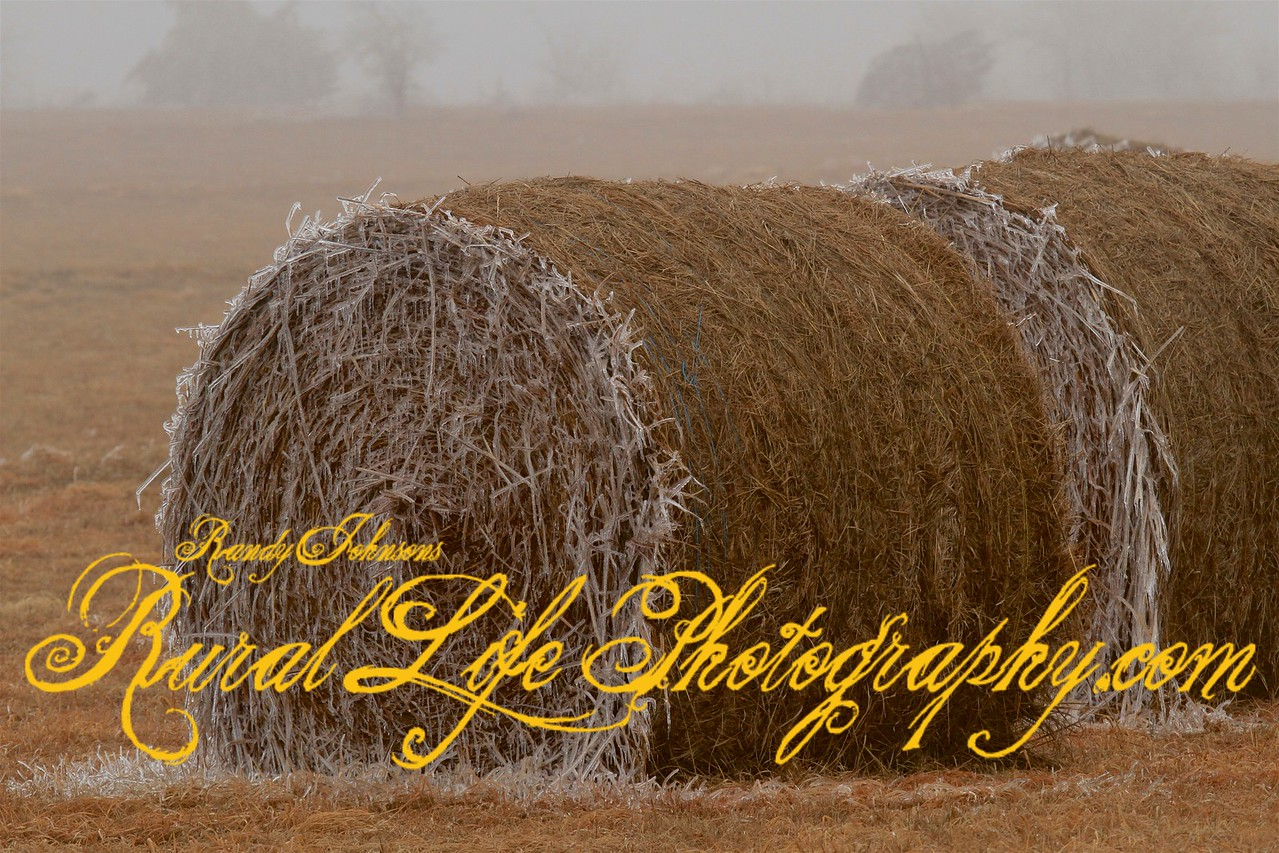 Shredded wheat