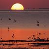 Vadefugler / Waders<br /> Barr Al Hikman, Oman 27.11.2010<br /> Canon EOS 50D + EF 400 mm 5,6 L