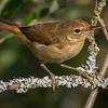 Rørsanger / Eurasian Reed-Warbler <br /> Linnesstranda, Lier 1.9.2013<br /> Canon EOS 7D + Tamron 150-600 mm 5,0 - 6,3 @ 375 mm