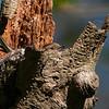 Bokfink / Chaffinch <br /> Linnesstranda, Lier 13.5.2006<br /> Canon EOS 20D + EF 400 mm 5,6