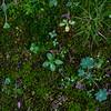 Moss with garden
