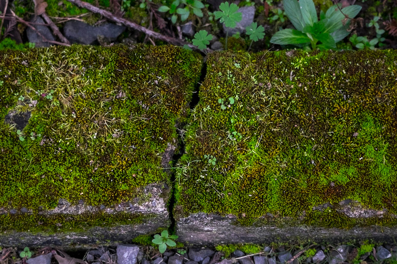 crack and moss