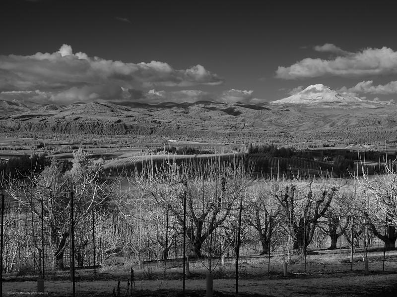 80mm Hasselblad, Zeiss @ f/8