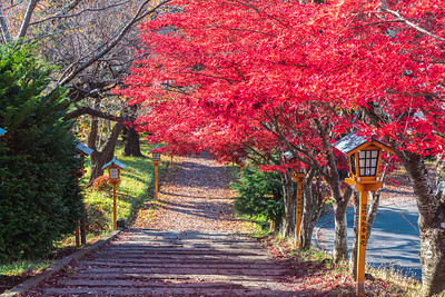 Red Leaves in Arakurayama Sengen Park