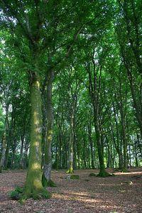 Trees somewhere