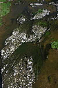River flowers 2