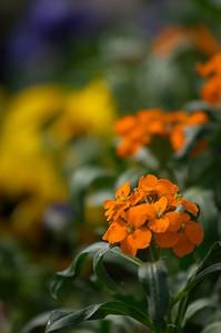 Mont st Michel flowers