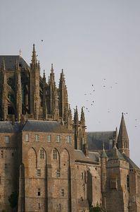 Mont St Michel birds
