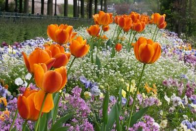 Bastille Port flowers 4