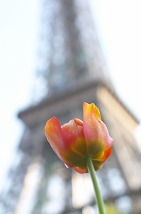 Flower TE 7