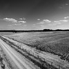Fence Posts & Cotton Rows (BW)