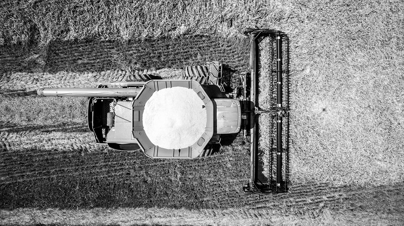 Deere from Above (BW)