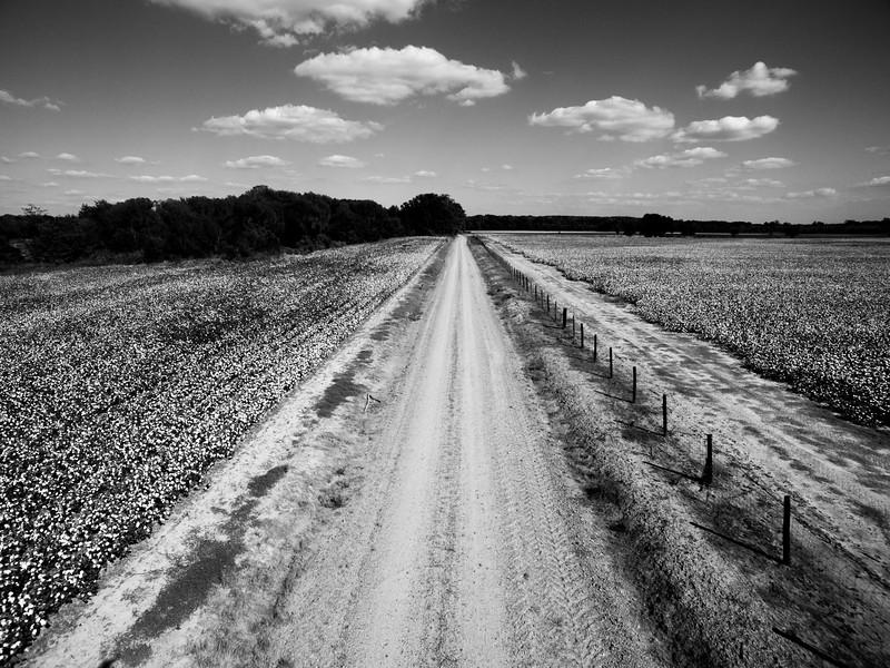 Cotton Road (BW)
