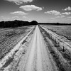 Cotton Road (BW)