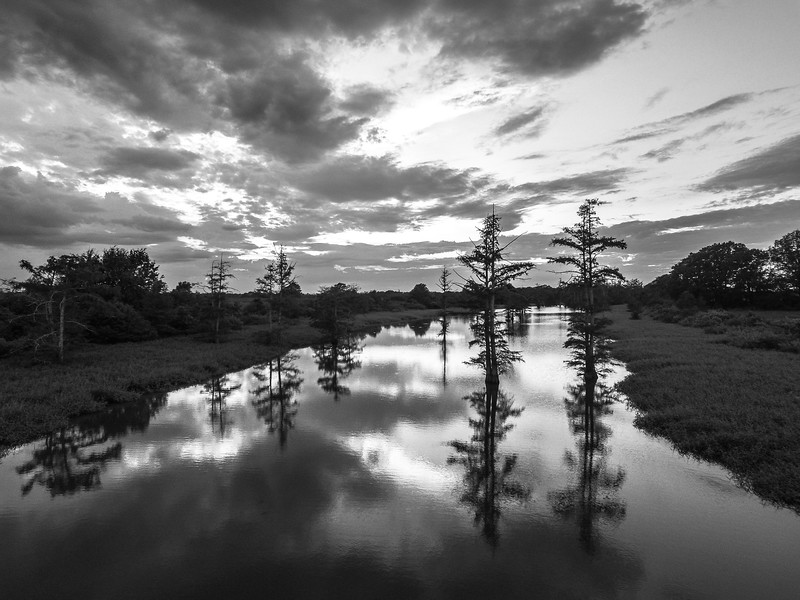 Cypress Break Sunset (BW)