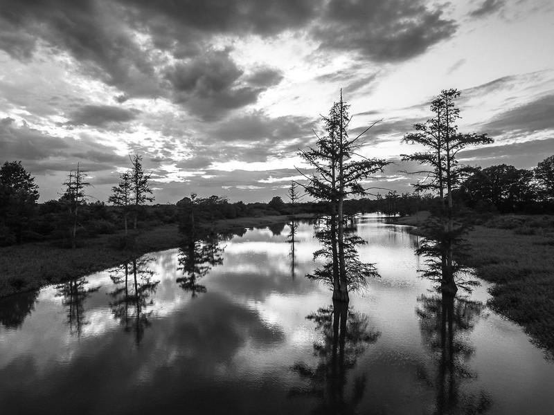 Greenwood Cypress Trees (BW)