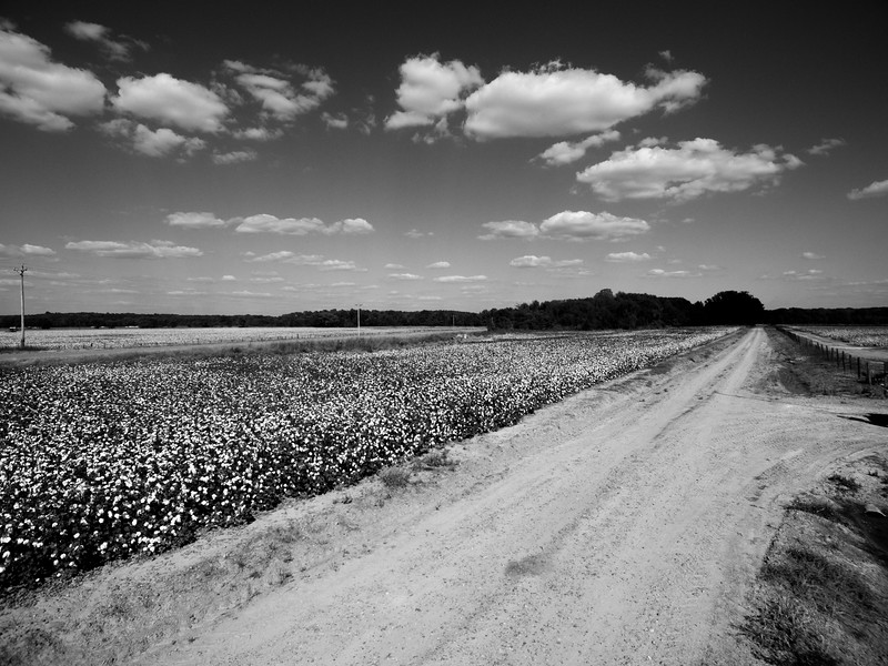Cotton Turnroad (BW)