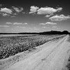 Cotton Turnroad (BW)