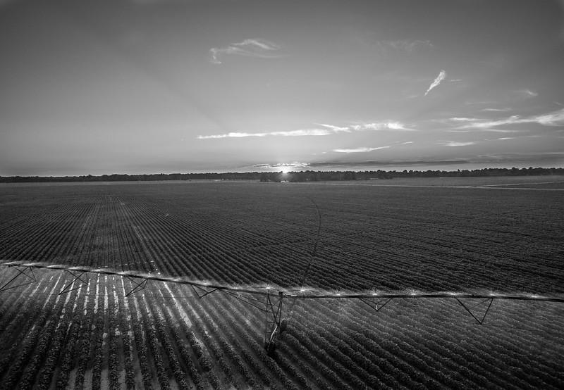Pivot Track into the Sunset (BW)