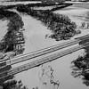 Flooded Bogue (BW)
