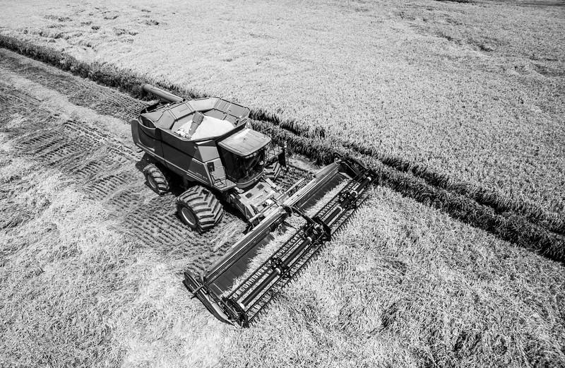 Deere Cutting Rice (BW)