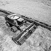 Deere Cutting Rice (BW)