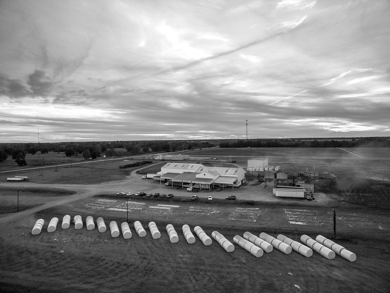 Crossroads Cotton (BW)