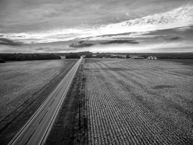 Highway 8 Cotton Fields (BW)