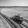 Case Cutting Rice (BW)