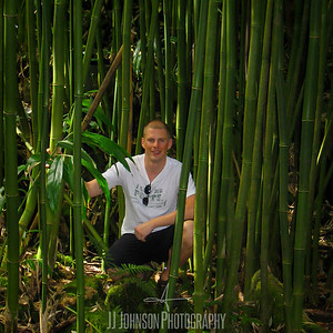 Lost in Bamboo