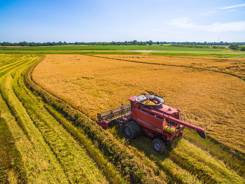 Case Cutting Rice