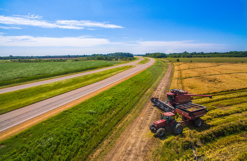 Rice Harvest on Highway 61
