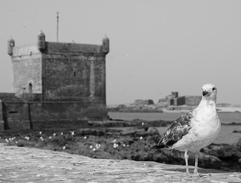 Beach and harbor city of Essaouira