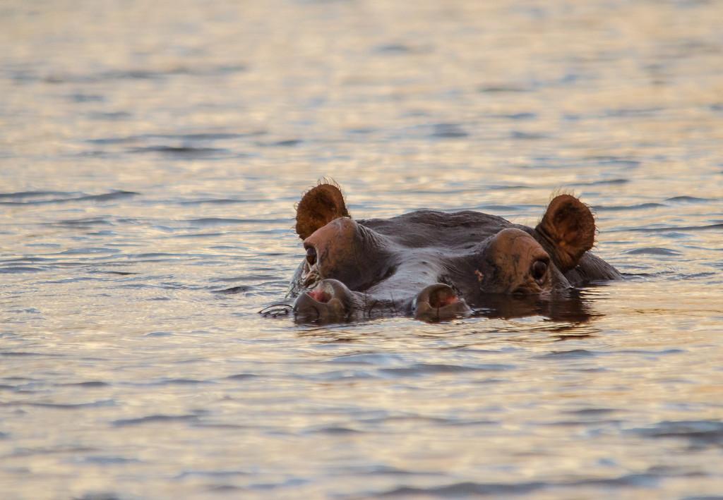 The sundowner swim