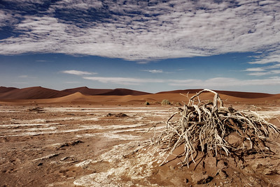 Dried out at Sossusvlei