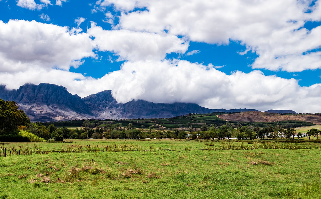Winelands landscape