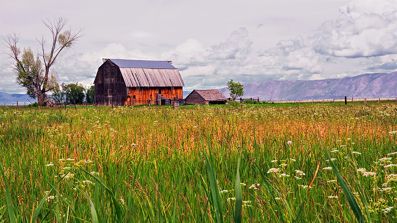Bear Lake Valley Farm