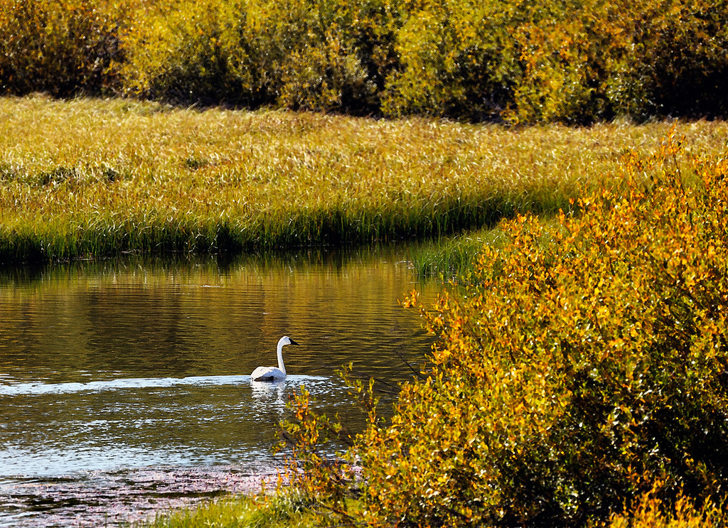 """Every lake belongs to the quietness desired by the swans.""  ― Munia Khan"