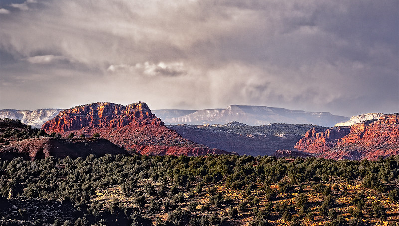 Utah juniper will grow in the rockiest of soil, giving contrast to southern Utah's red-rock.