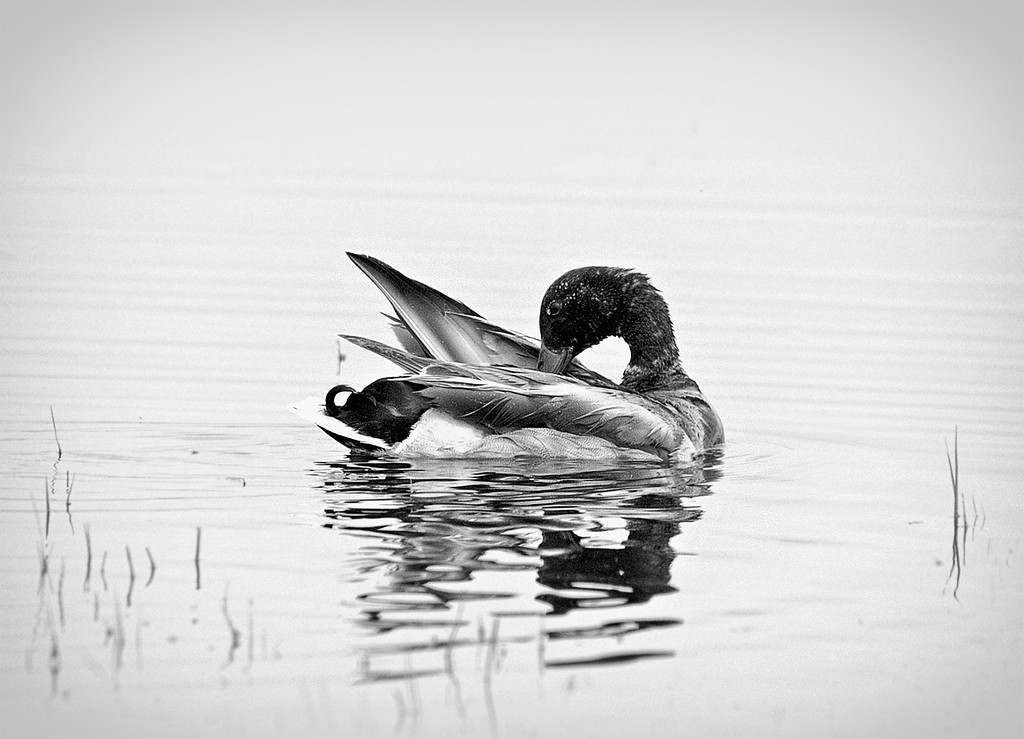 If you keep your feathers well oiled the water of criticism will run off as from a duck's back.  - Ellen Swallow Richards