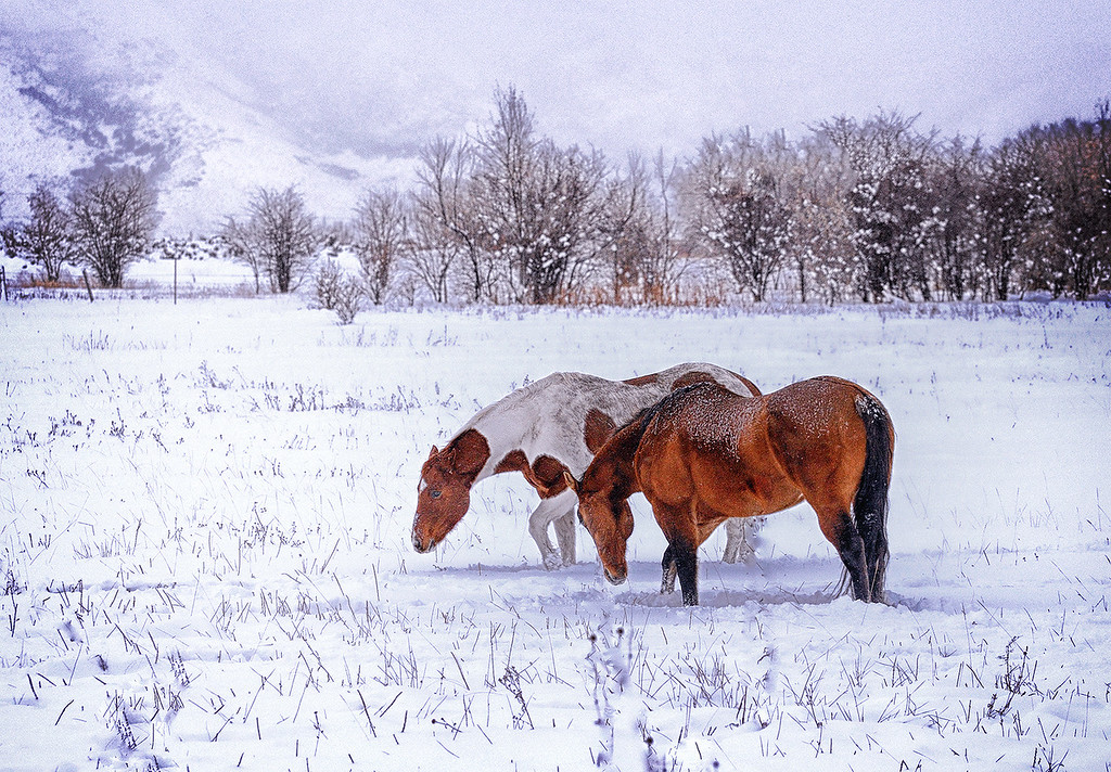 Horses make a landscape look beautiful. - Alice Walker