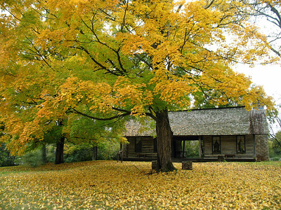 Belle Meade Plantation in Nashville, Tennessee (1)
