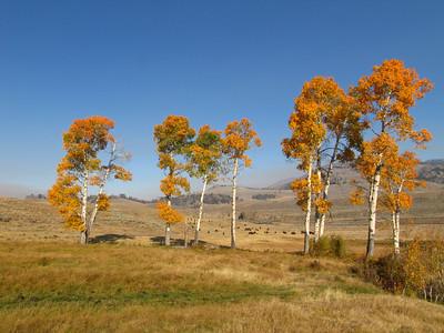 Yellowstone National Park, Wyoming (6)