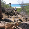 Galapagos Land Iguana, Santa Fe Island, Conolophus pallidus