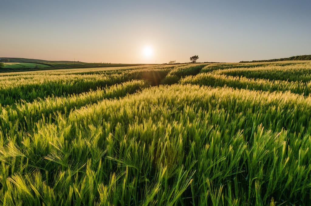 Field at sunset, Devon