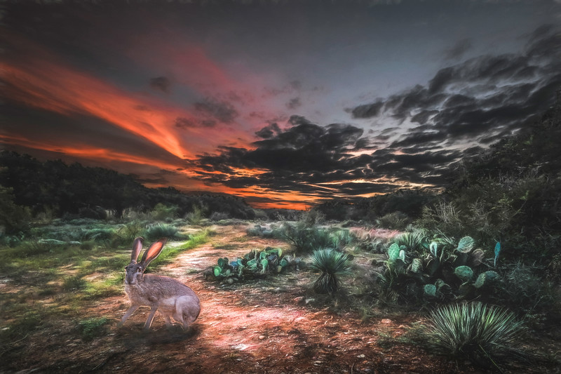 Centennial Springs Rabbit Sunset Lightened-1-1
