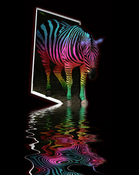 437986600_zebra painted flood four