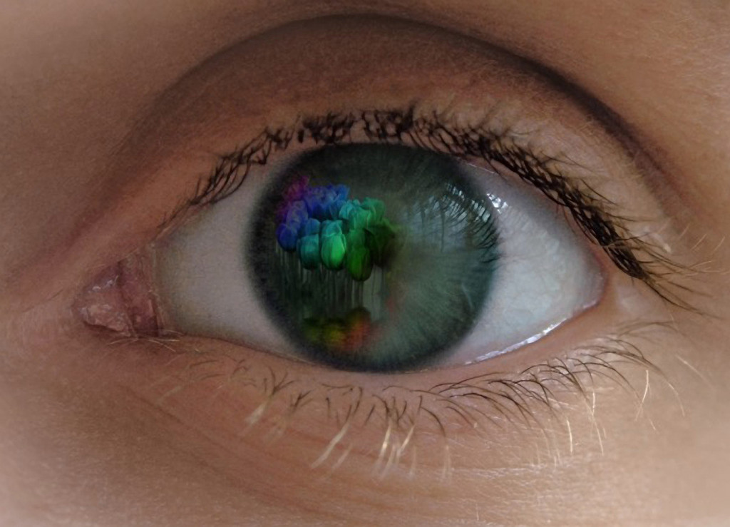 painted tulips in an eye